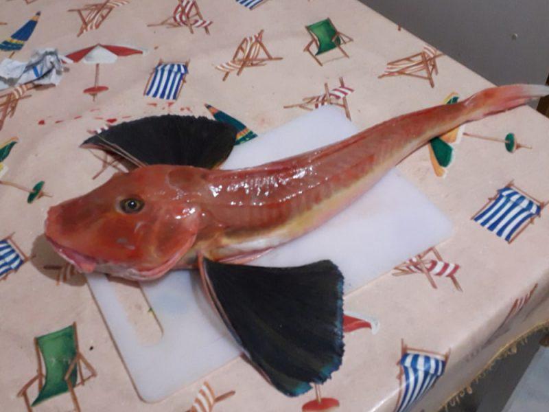 Un pesce sul tavolo