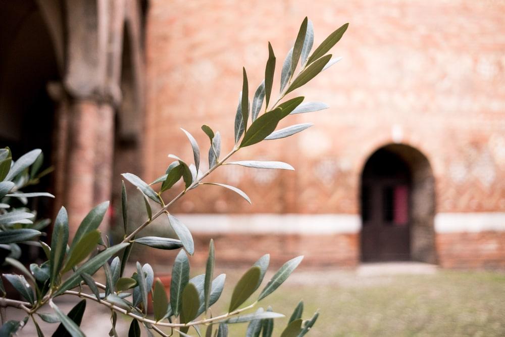 Ramoscello d'ulivo con dietro una chiesa