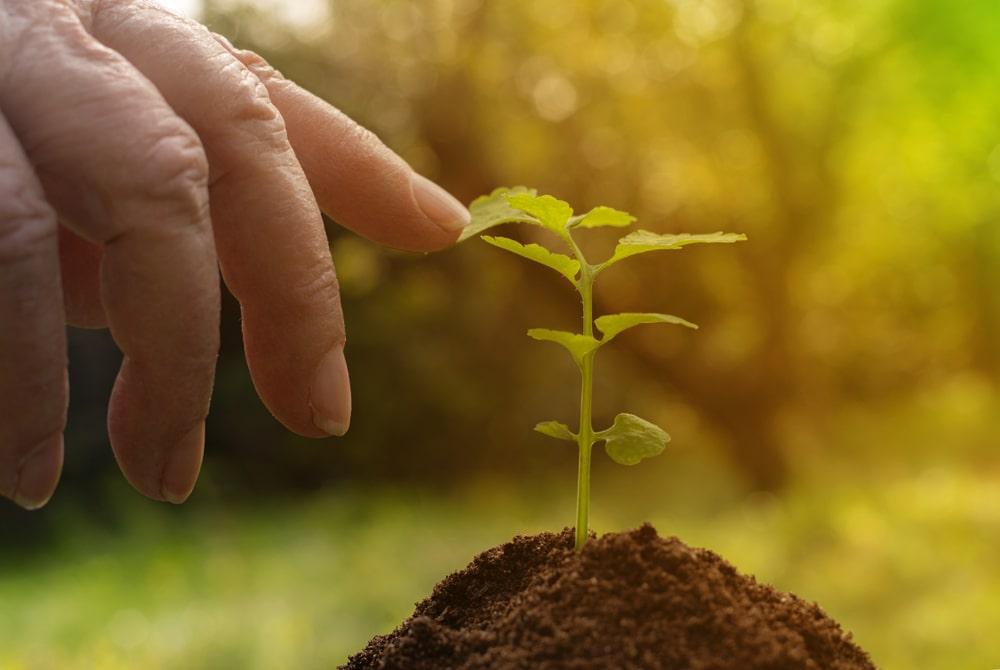 Mani che piantano un albero