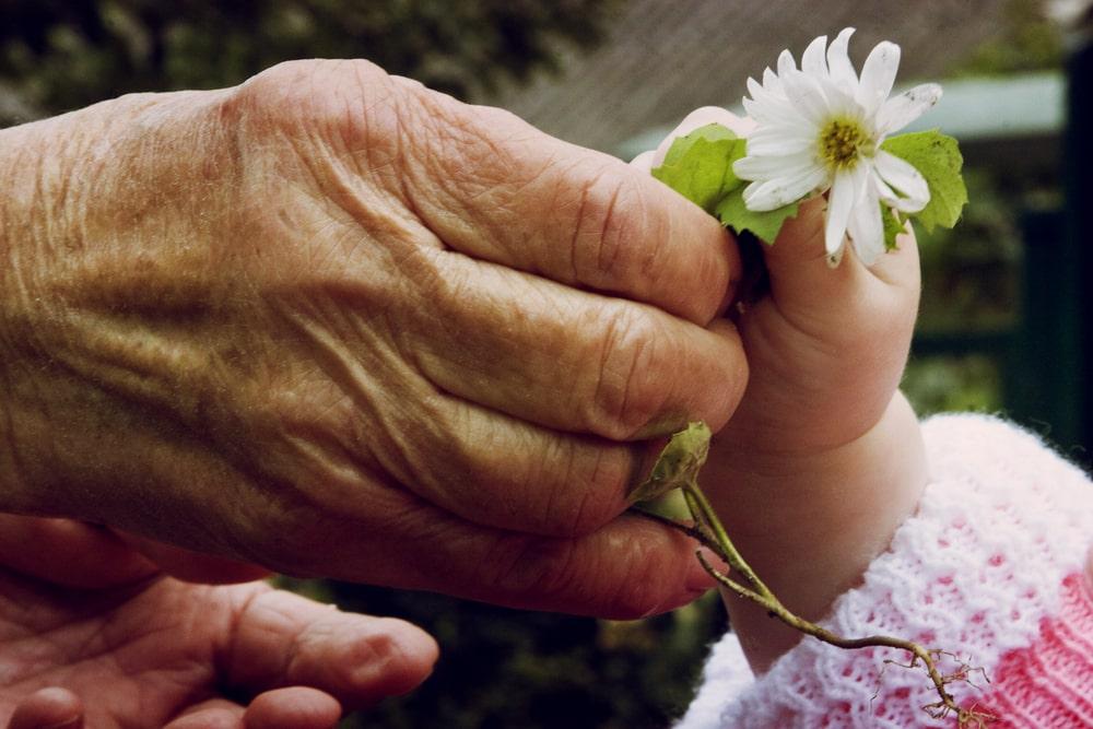 Mani si scambiano un fiore