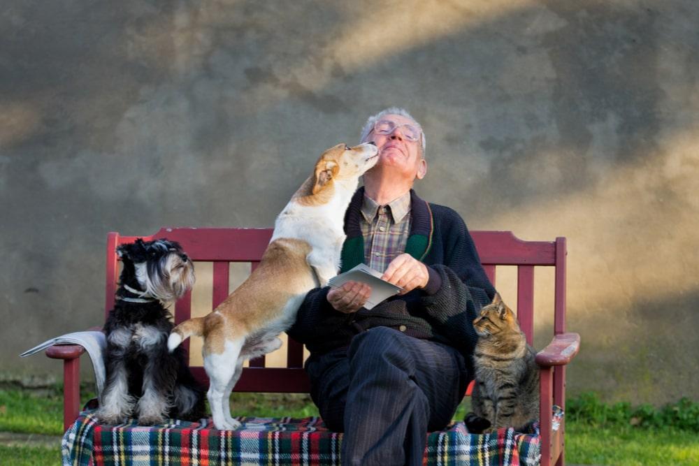 Senior con cani e gatti