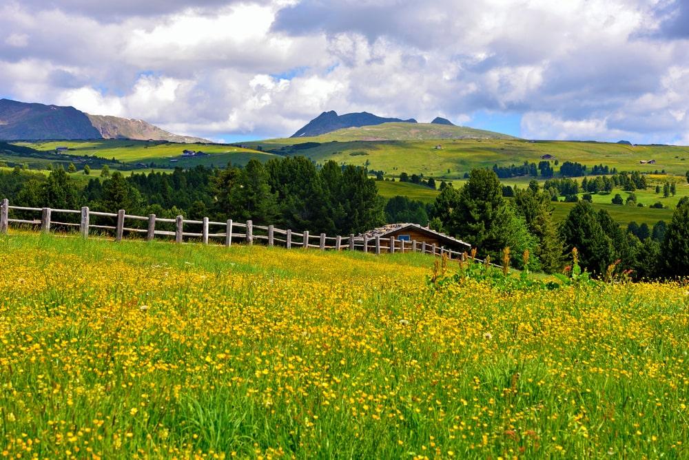 Alpe di Villandro estate