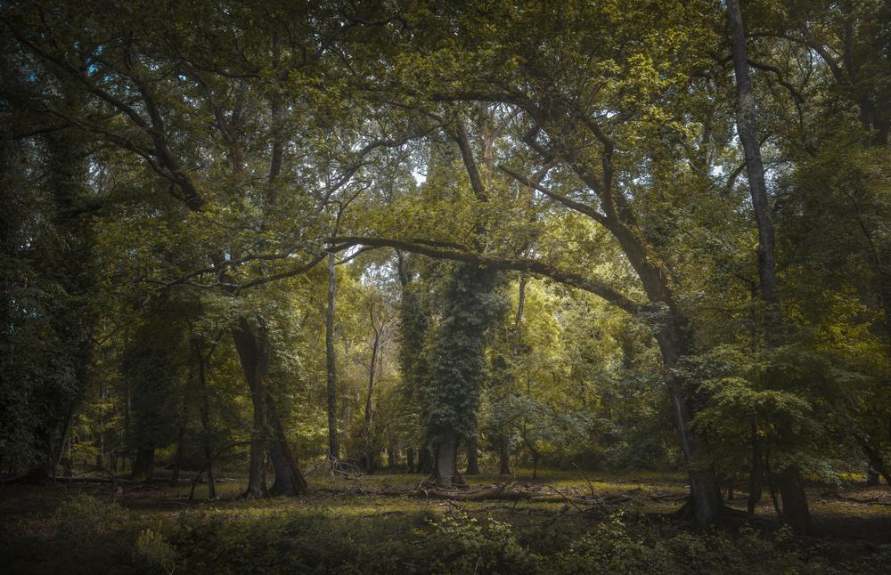 Parco di San Rossore Lucca